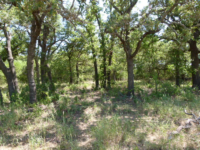 300 FM 583, MAY, Texas 76857, ,Farm/Ranch,For sale,FM 583,1196