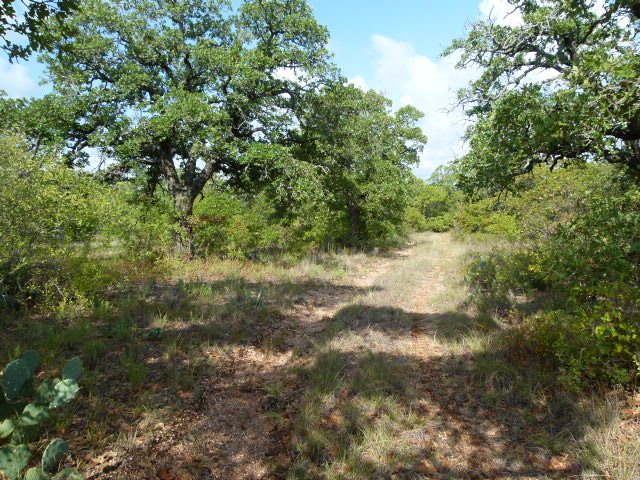 HWY 6, CISCO, Texas 76437, ,Farm/Ranch (Sold),Sold,HWY 6,1203
