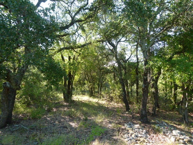 4215 HWY 279, BROWNWOOD, Texas 76801, ,Farm/Ranch,For sale,HWY 279,1213
